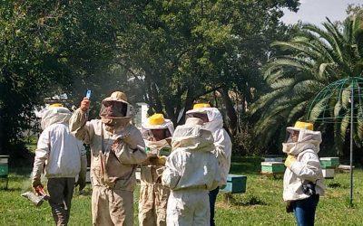 Apicultores argentinos se suman a proyecto que cuida la salud de las abejas para mejorar su productividad