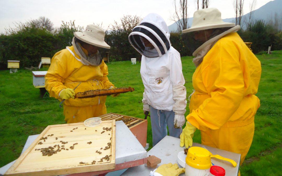 Transformando la salud de las abejas melíferas en conocimientos significativos