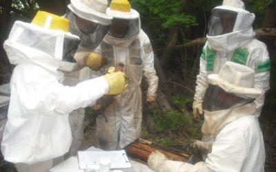 Monitoreo en Argentina detecta problemas en volumen de miel y sanidad de las colmenas
