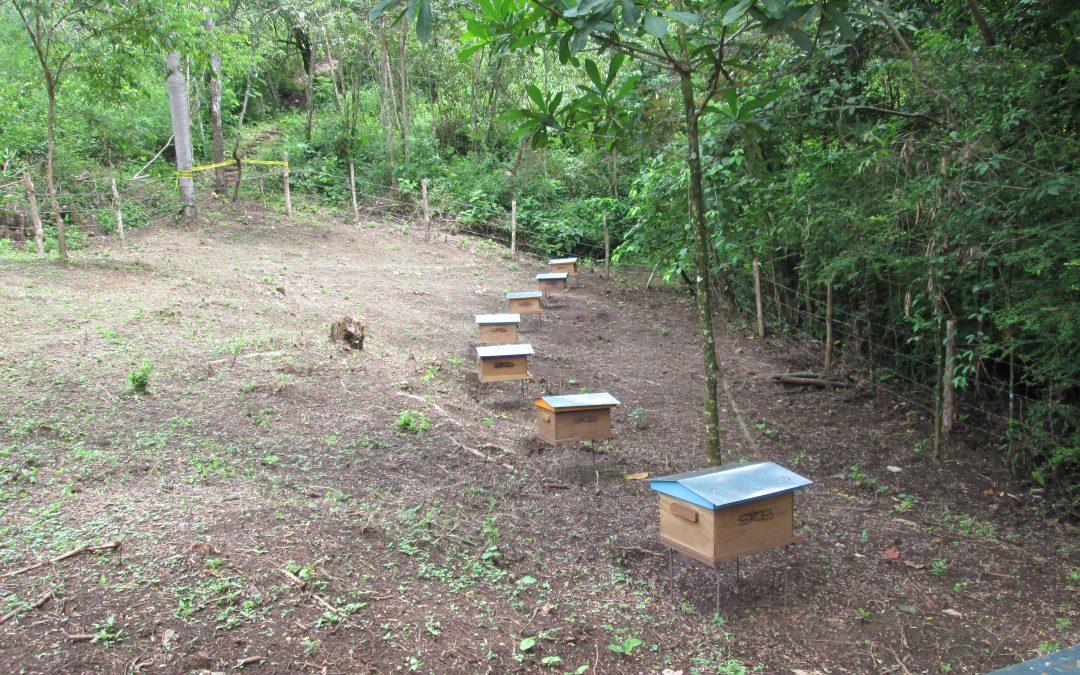 Primer monitoreo en Costa Rica entrega una visión sobre los apiarios de zonas cafetaleras