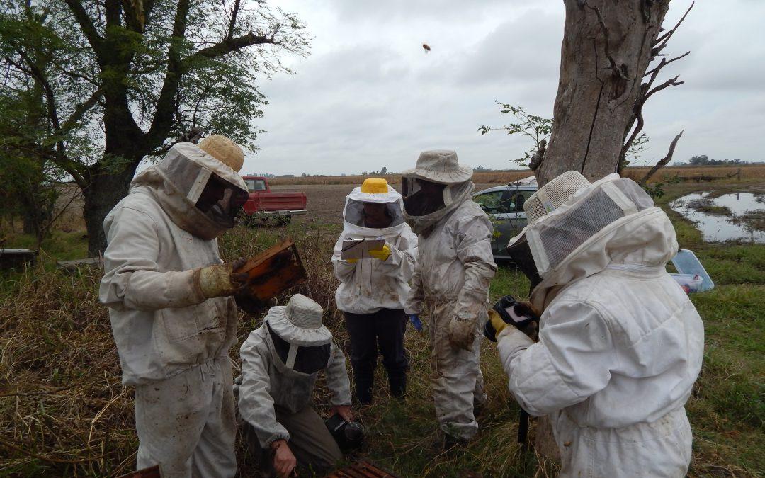 ¡Los apicultores opinan!