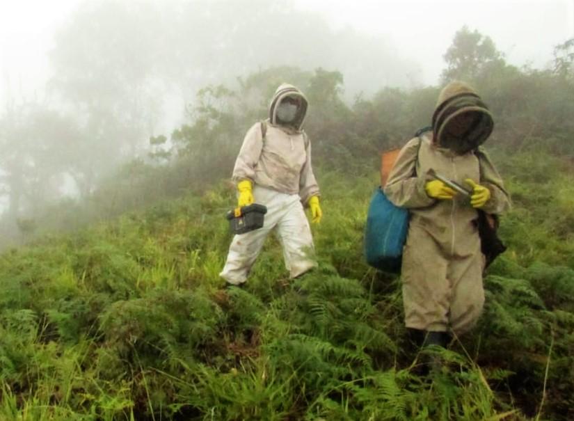 Monitoreos revelan la salud de las abejas en el Cauca