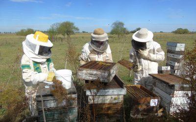 Ley apícola para Santa Fe: una herramienta para la mejora integrada de la apicultura