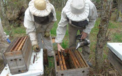 Descifrando el ciclo productivo y las problemáticas apícolas en la provincia de Santa Fe