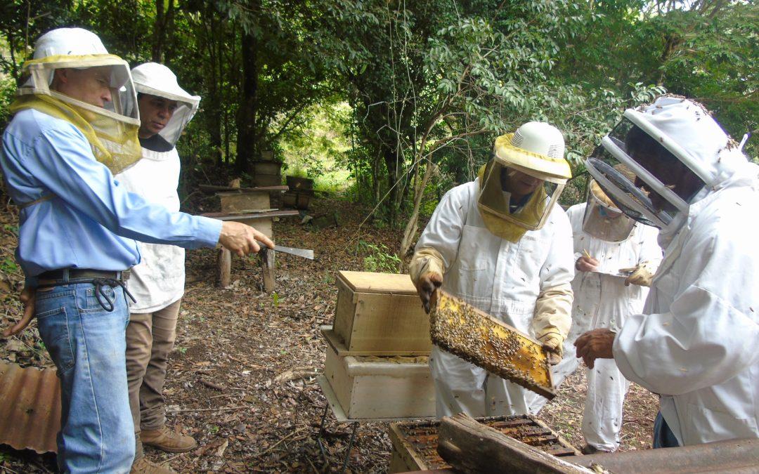 Costa Rica concluye el primer monitoreo de apiarios