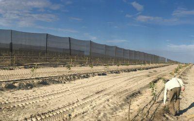 Abejas: grandes aliadas para la expansión agrícola en Perú