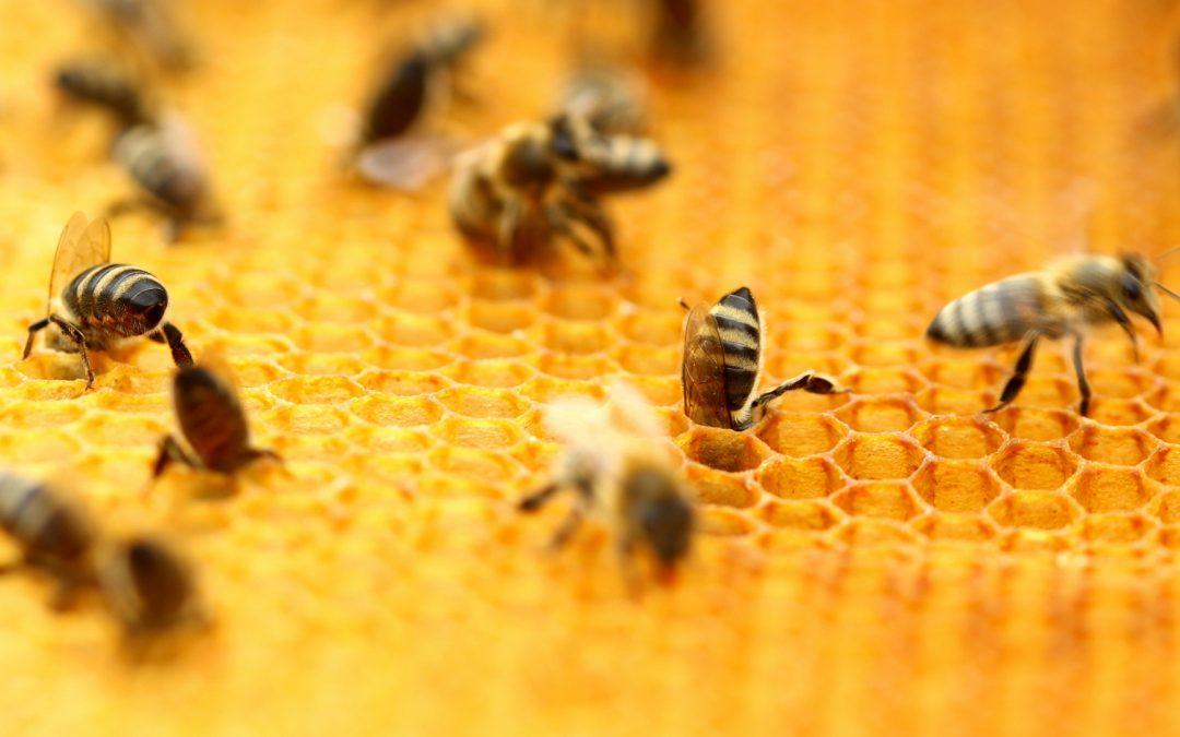 Láminas de cera estampada: factor decisivo en la calidad de los productos apícolas