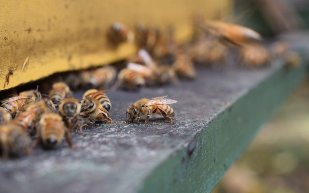 ¿Qué ocurre con el movimiento de colmenas durante la contingencia por COVID-19 en Chile?