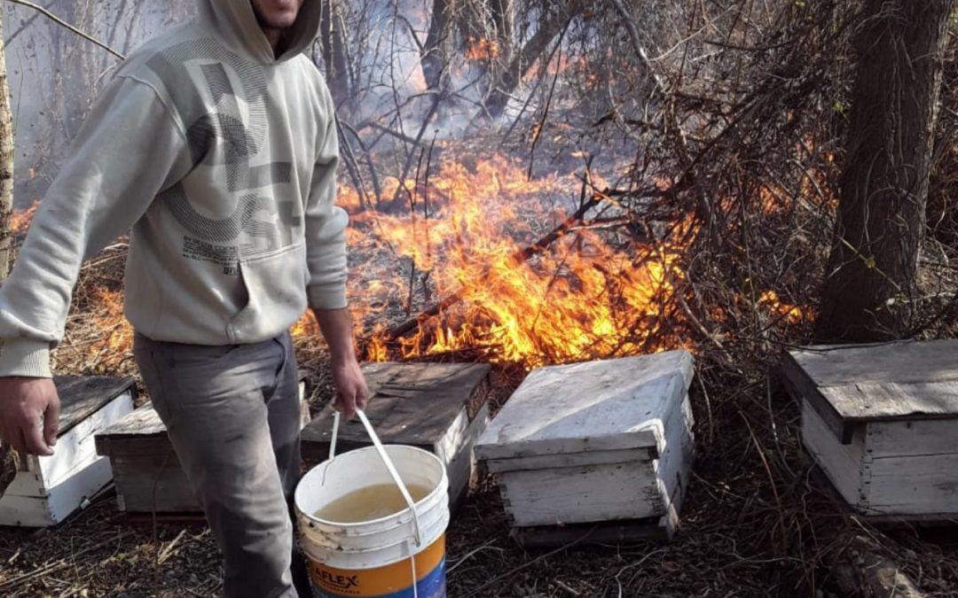Salud Apícola Latinoamérica en Argentina alerta sobre severas consecuencias de incendios intencionales