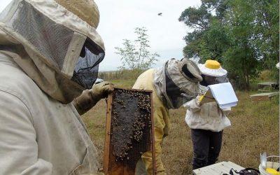 Identifican prácticas apícolas que más impactan sobre la salud y productividad de las abejas melíferas
